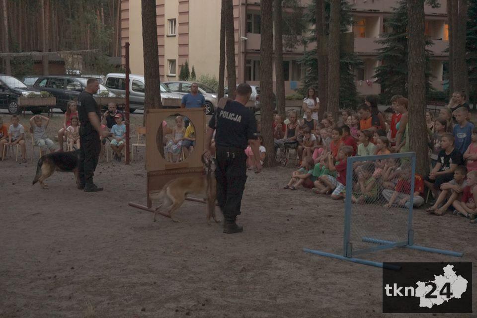 Pokaz psów5