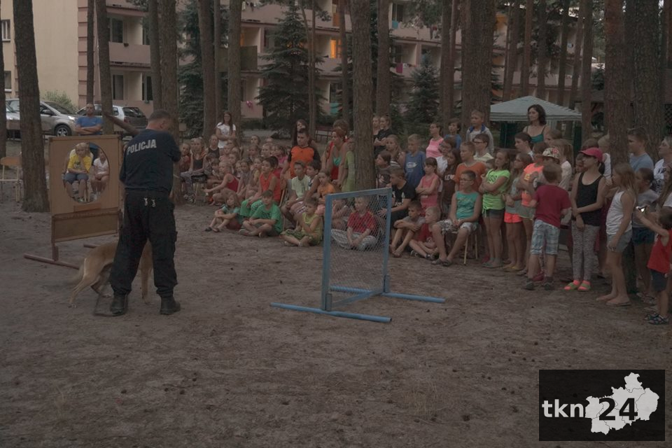 Pokaz psów6